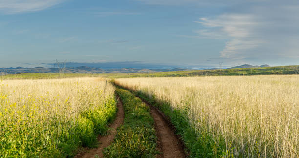 A dirt road weaving through a green field to distant mountains in the Aqua Fria National Monument stock photo