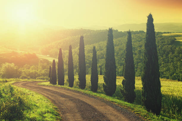 dirt road with cypress trees in tuscany, italy - cypress tree stock photos and pictures