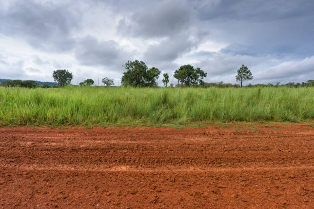 Dirt roadside view with the meadow Dirt roadside view with the meadow horizon over land stock pictures, royalty-free photos & images