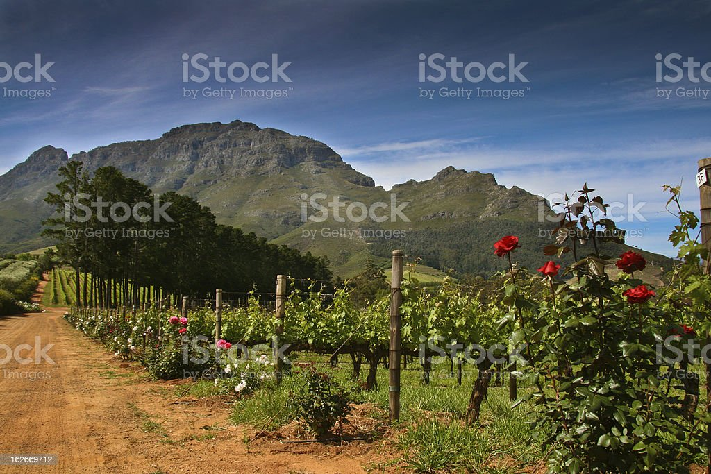 A dirt track winding through the South African Wine Country stock photo