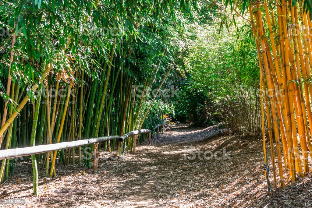Dirt Trail in Bamboo Forest stock photo
