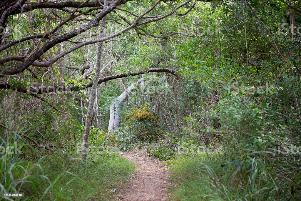 A Dirt Walking Track Covered With Leaves Leading Into The Bush - Royalty-free Adventure Stock Photo