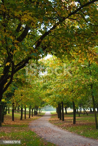 Trees of with yellow and green leaves and a dirt gangway