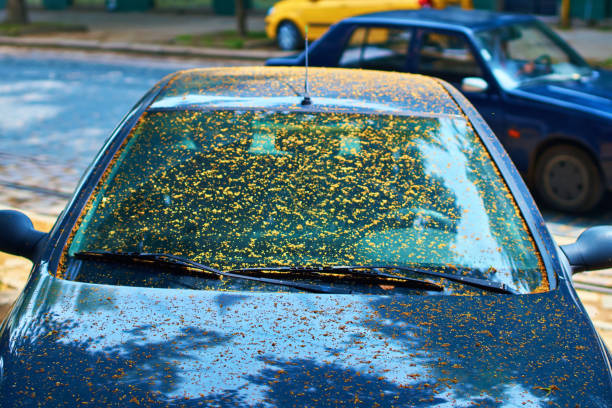 Dirty car windscreen due to yellow sticky coating from being parked under a linden tree caused by aphids Dirty car windscreen due to sticky coating from being parked under a linden tree caused by aphids. aphid stock pictures, royalty-free photos & images