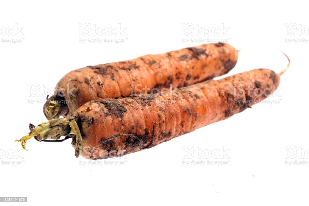 dirty Carrots isolated on white background royalty-free stock photo