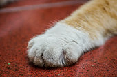 Dirty Cat Paw