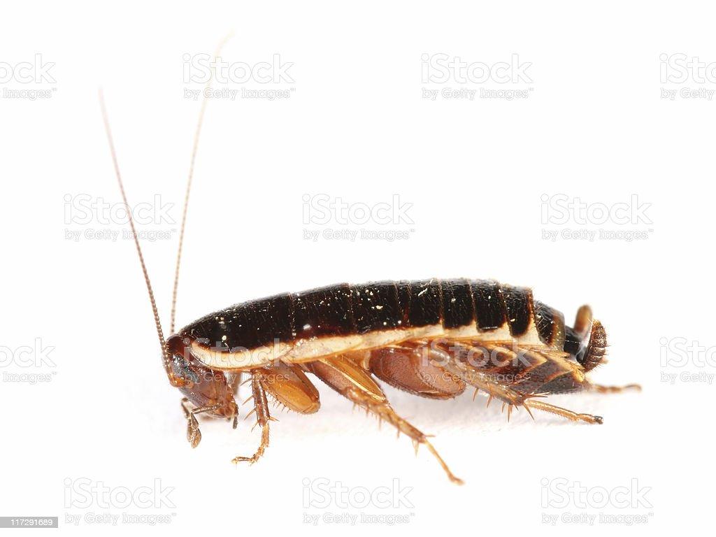 Dirty Cockroach stock photo
