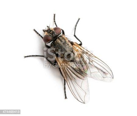 Dirty comune mosca domestica visto dallalto musca for Piani di progettazione domestica