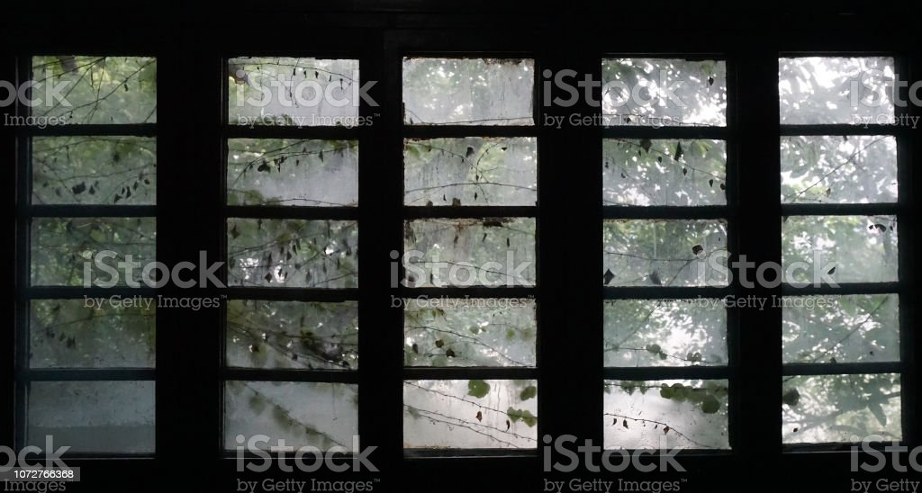 Dirty, fogged window frame with vines. stock photo
