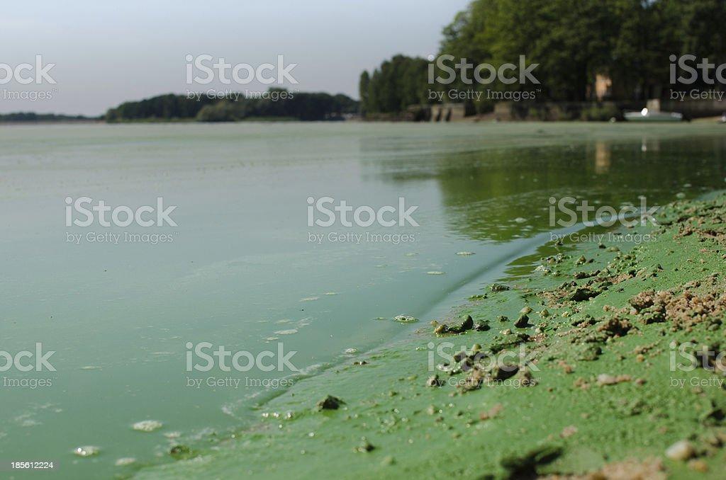 Dirty, green beach. stock photo