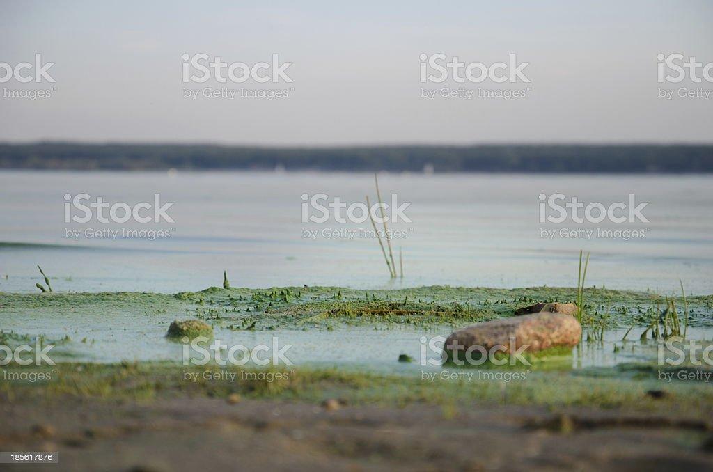 Dirty, green beach. royalty-free stock photo