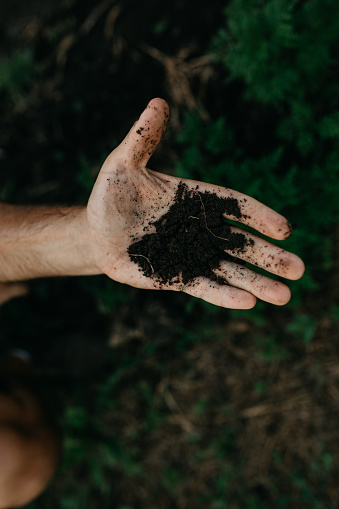 Low angle view of woman's hands planting flowers in spring
