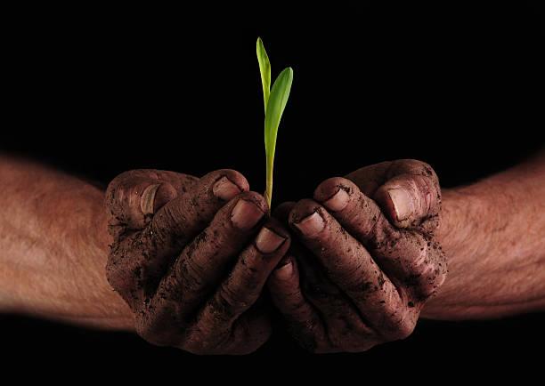 dirty hand mit neuen plant - gemüsenudelschneider stock-fotos und bilder