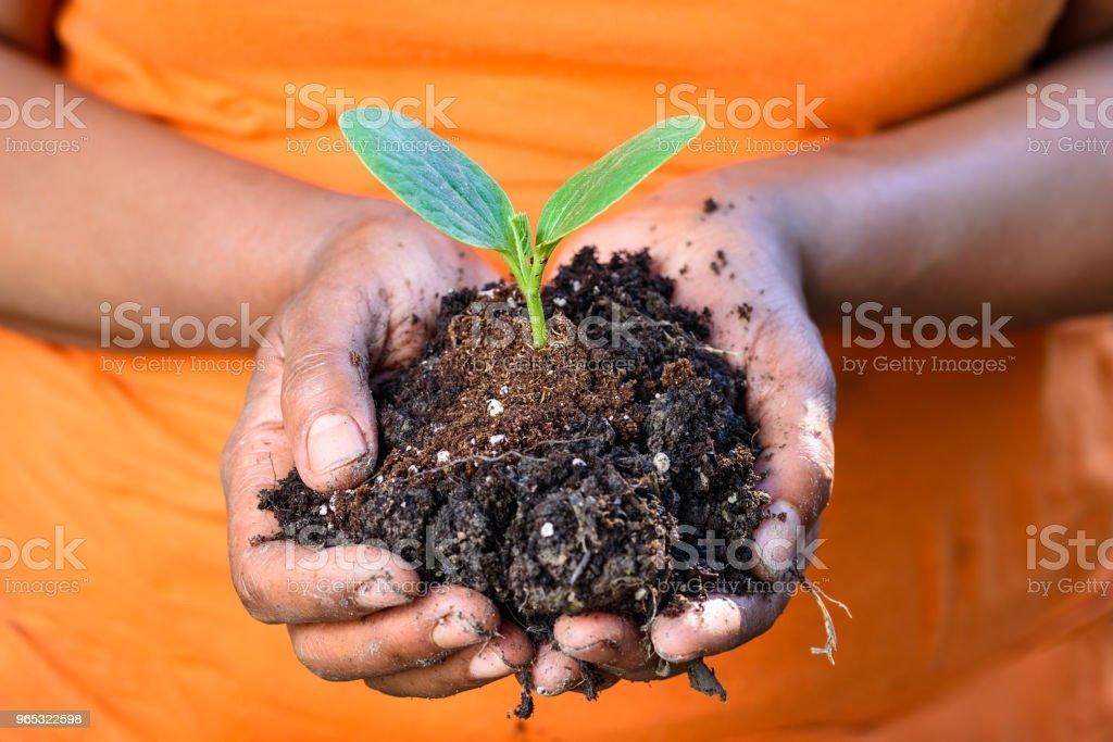 Mains sales d'un fermier tenant sol et plante verte jeune fraîche ensemble - Photo de Adulte libre de droits