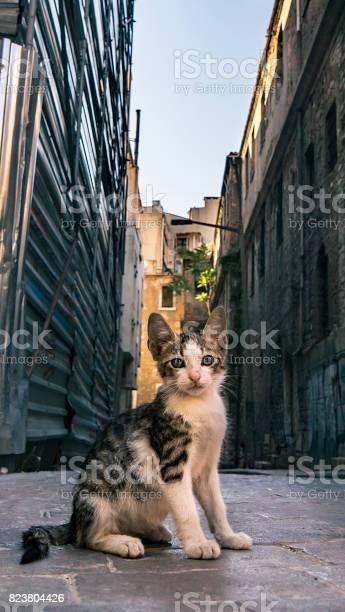 Dirty homeless cat picture id823804426?b=1&k=6&m=823804426&s=612x612&h=odhvxd 0l4bo3jh8crozmhyy4rgzi3fk8boswv824uc=