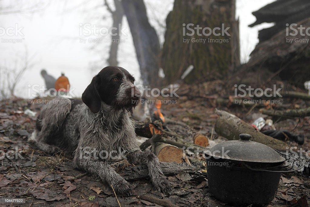 Dirty hunting dog near bonfire and cauldron stock photo