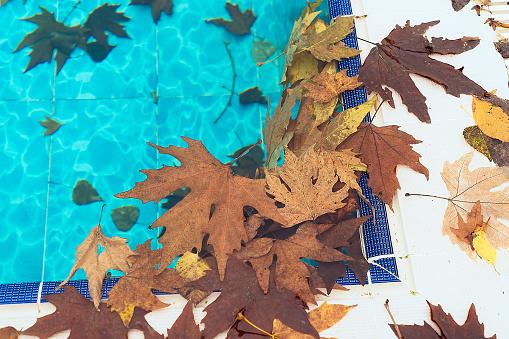 Dirty swimming pool in autumn season
