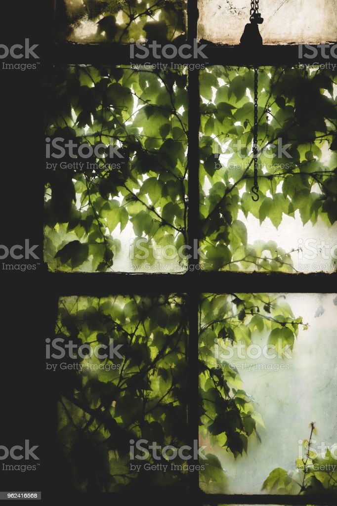 Dirty Window into Vines stock photo