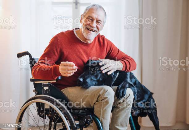 Disabled senior man in wheelchair indoors playing with a pet dog at picture id1126707747?b=1&k=6&m=1126707747&s=612x612&h=q8l1ygd6gxljvpcyh5bugeaowbv34zh3k bufwshd s=