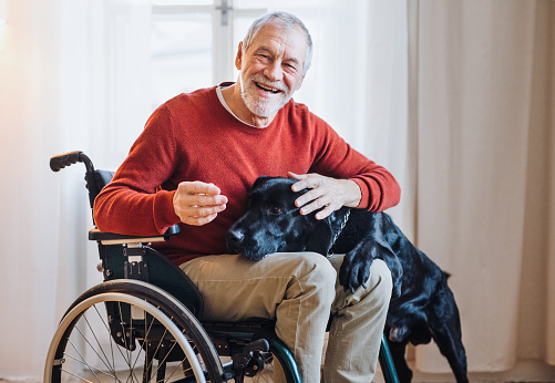 istock A disabled senior man in wheelchair indoors playing with a pet dog at home. 1128678409