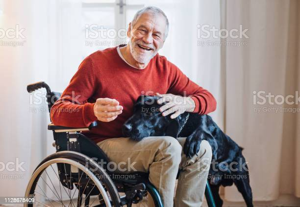 Disabled senior man in wheelchair indoors playing with a pet dog at picture id1128678409?b=1&k=6&m=1128678409&s=612x612&h=nefmun1gzqqts0ddw0w39fvdwyl6paer70ff6qhkzs4=