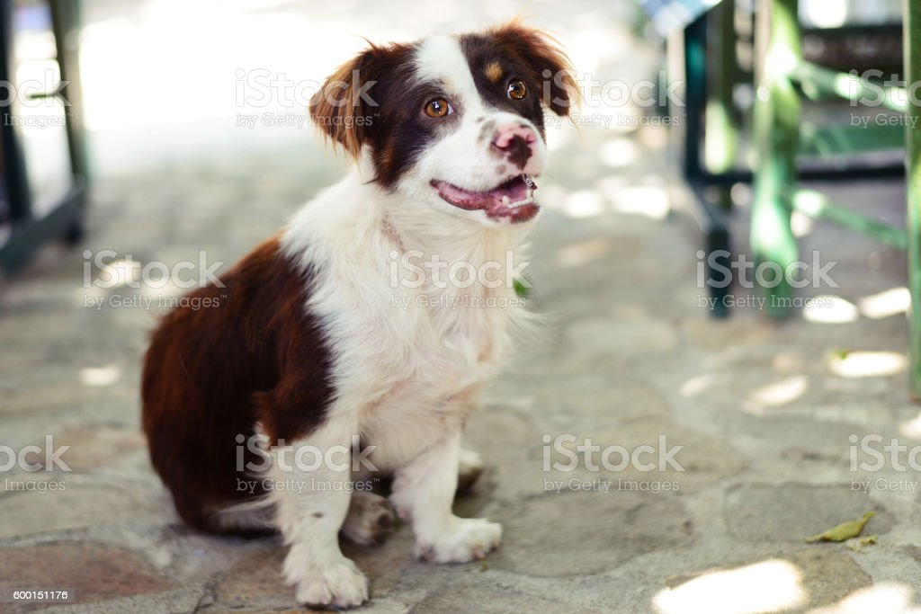 Disbelieving puppy - Royalty-free 2016 Stock Photo