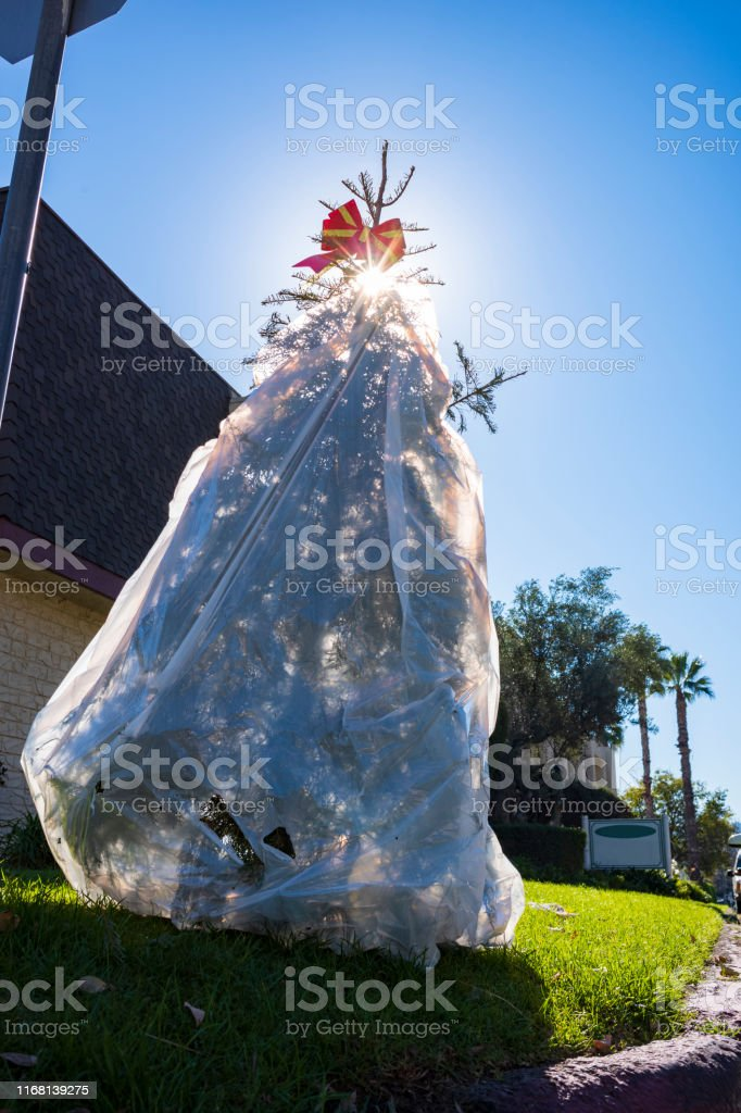 Discarded Christmas Tree With Bow Decoration Wrapped In A ...