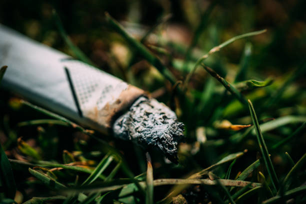 Discarded cigarette on moorland stock photo