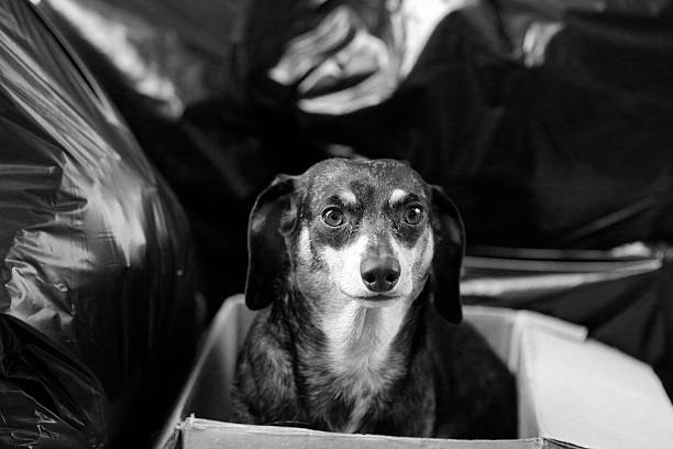 Discarded dog amid trash bag stock photo