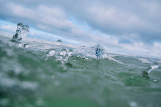 discarded plastic water bottle floating on the sea surface. - trash stock pictures, royalty-free photos & images