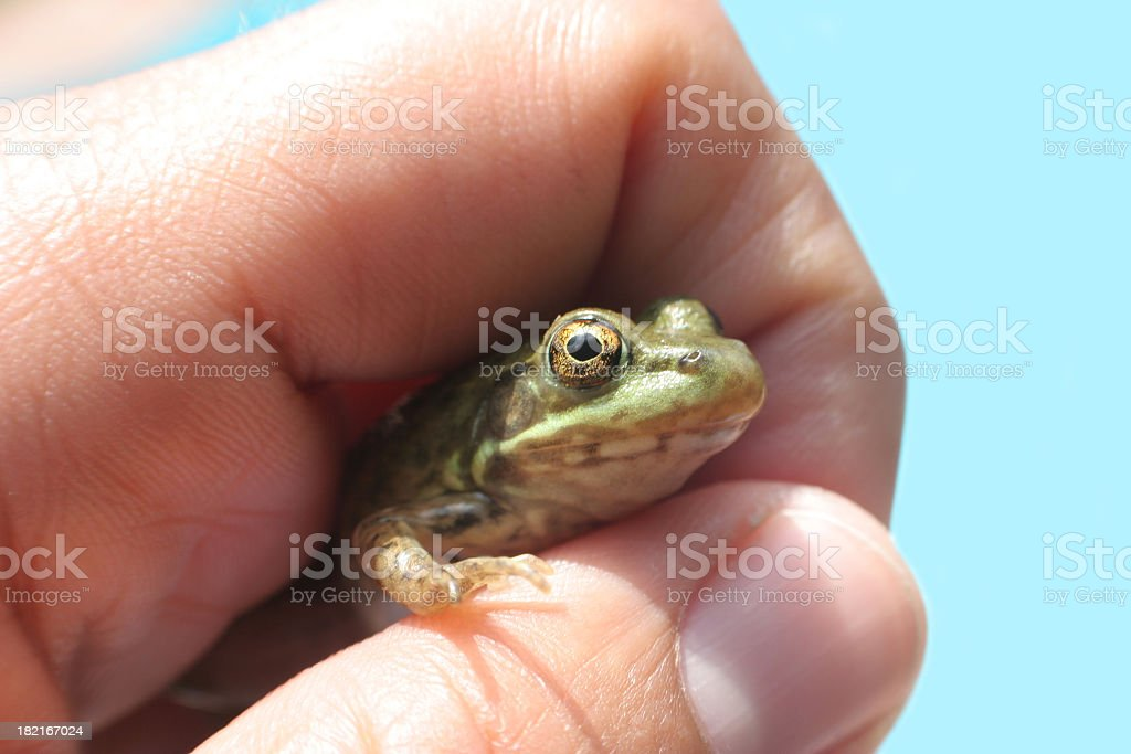 Discover frog stock photo
