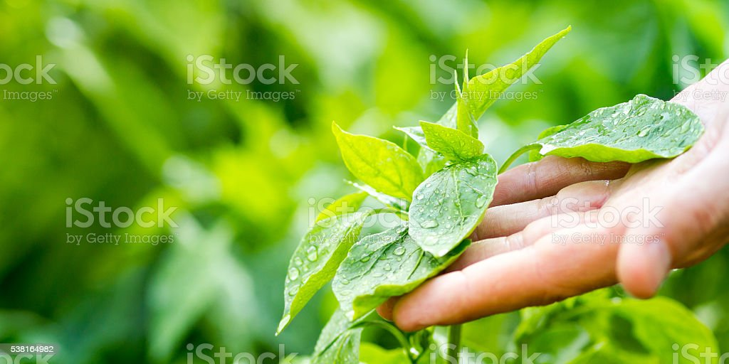 Discover Nature stock photo