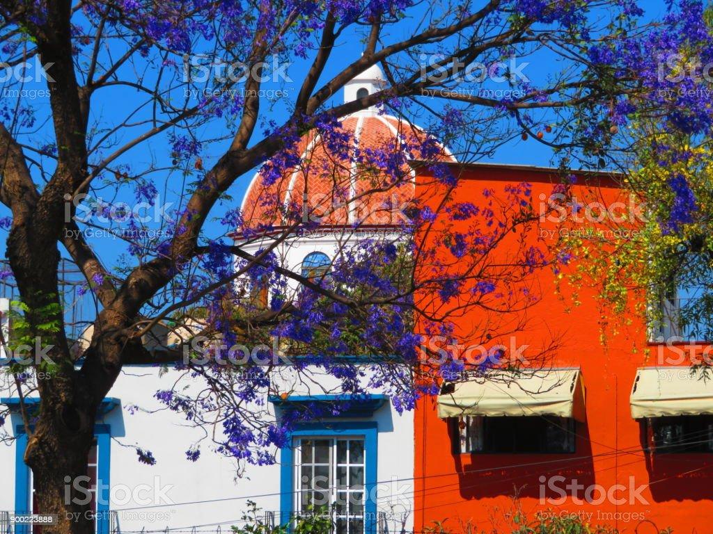 Discovering Mexico Jacaranda Trees Oaxaca City Stock Photo