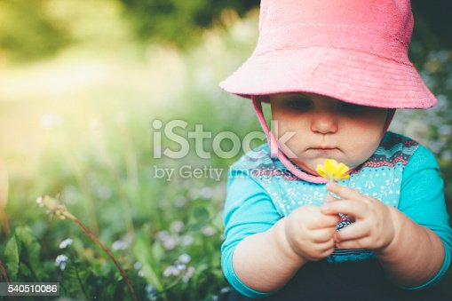 istock Discovering Nature 540510086