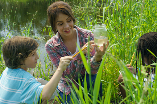 A multi-ethnic group of school children are on a school science trip to a pond outdoors. In this frame a hispanic female teacher is next to two students examining their findings from the pond.