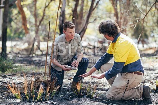 Rockingham Lake regional park.Team of scientific environmental conservationist working together collecting data and examining Tree Grass. The Australian Bush has been damaged by fire.