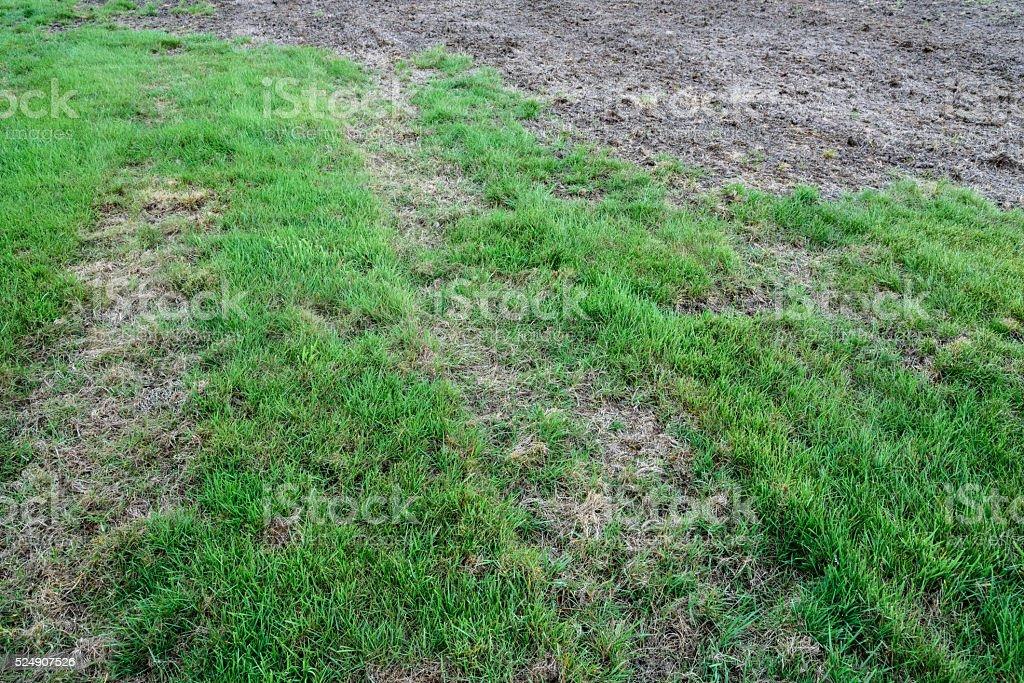 Diseased lawns stock photo