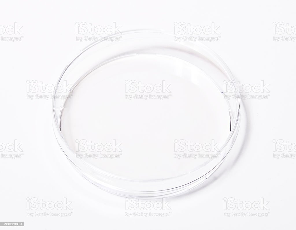 Dish, petri isolated on white stock photo
