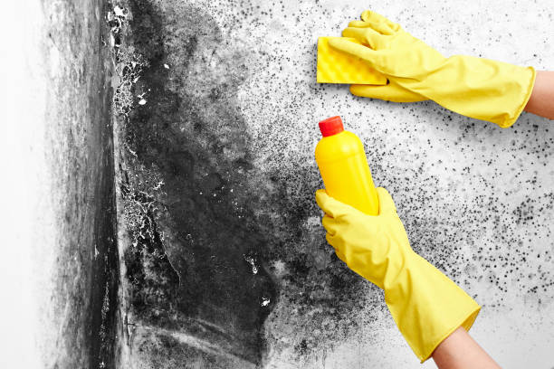 """Disinfection of Aspergillus fungus. A hand in a yellow glove removes black mold from the wall in the apartment with a sponge. Detergents.""""n"""