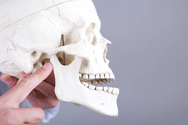 dislocated temporomandibular gemeinsame – Foto