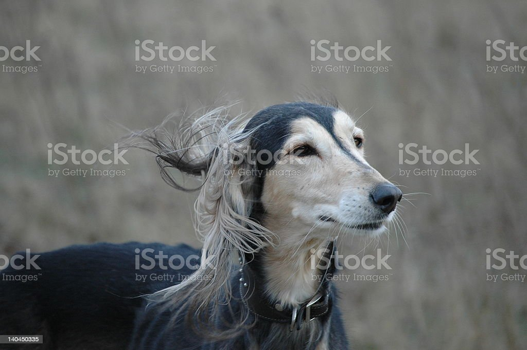 Dispelled hair stock photo