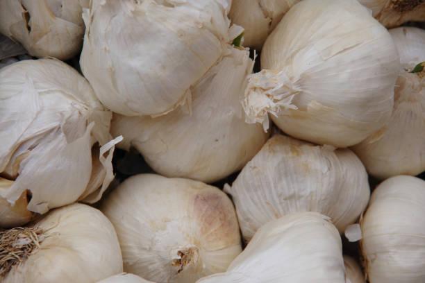 Display of garlic stock photo