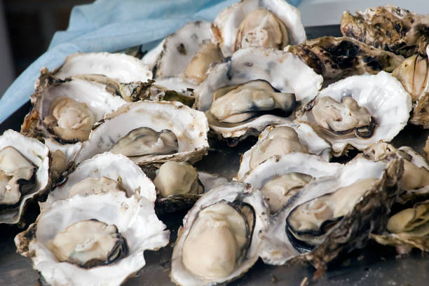 Display of raw oysters. Galicia, Spain. stock photo