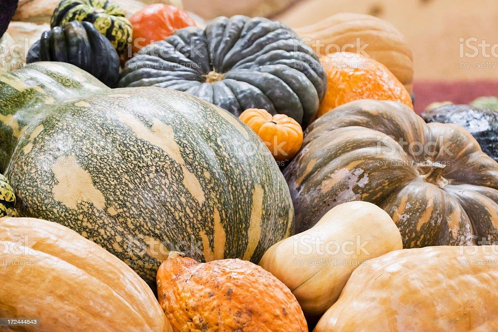 Display of various Pumpkins royalty-free stock photo