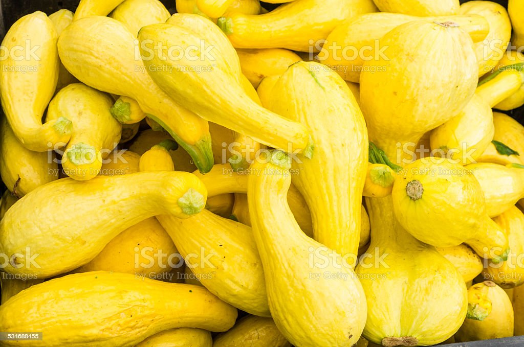 Display of yellow squash at the market stock photo