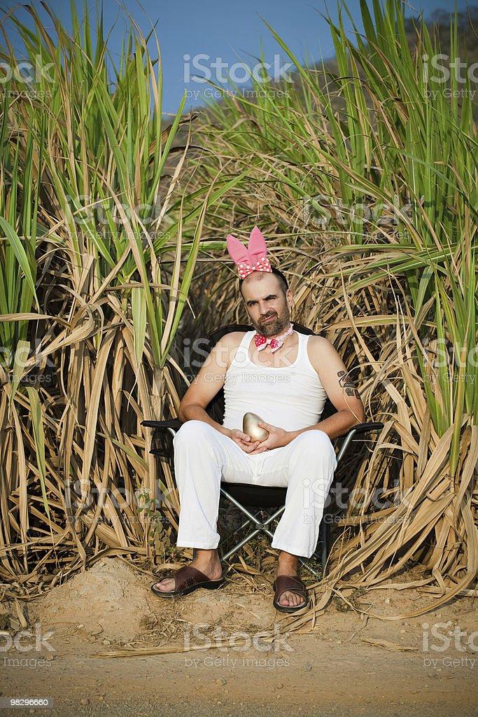 Contrariato Coniglio foto stock royalty-free