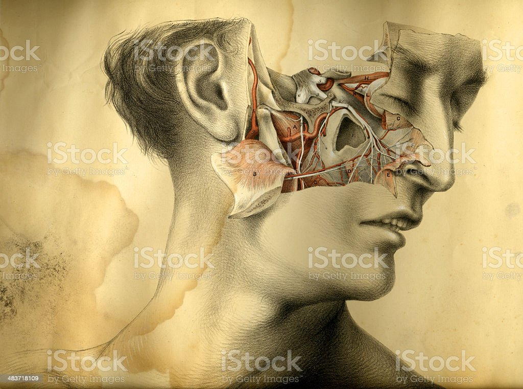 Dissected face stock photo