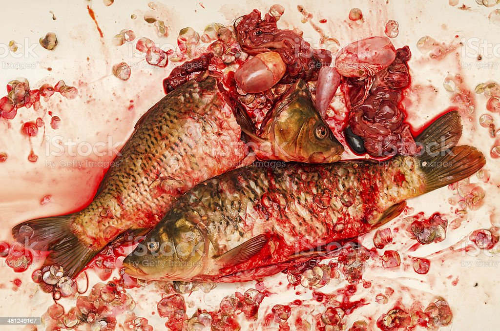 Dissected fish royalty-free stock photo