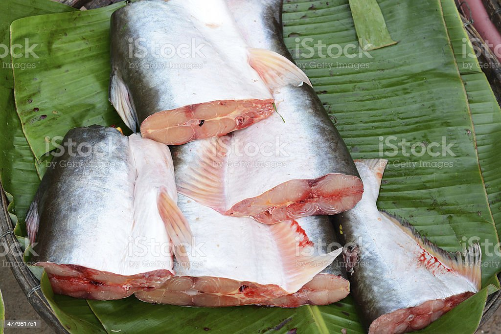 Dissected Pangasius fish royalty-free stock photo
