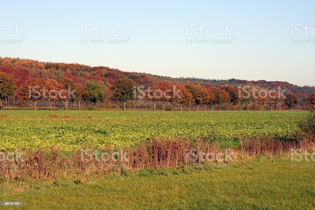 Distant Autumn Fire royalty-free stock photo